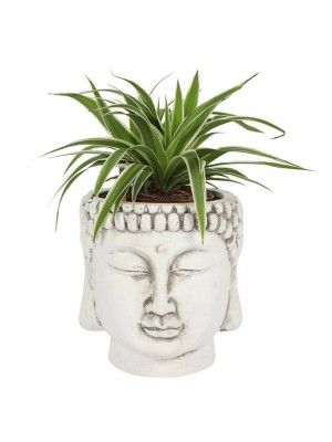 White Terracotta Buddha Head Planter