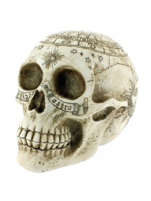 Astrological Skull 20cm Wholesale