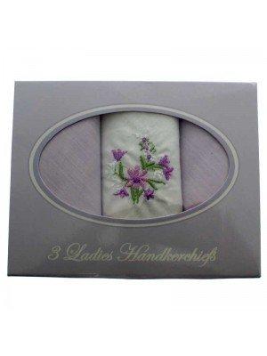 Anucci Cotton Rich Ladies Handkerchiefs - Pack of 3
